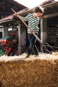 Boy on straw bale with pitchfork on organic dairy farmの写真素材 [FYI03582776]