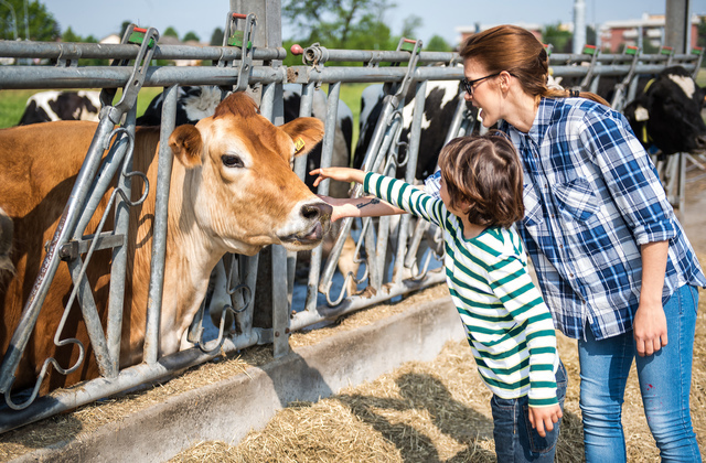 Female farmer and boy petting cow on organic dairy farmの写真素材 [FYI03582786]