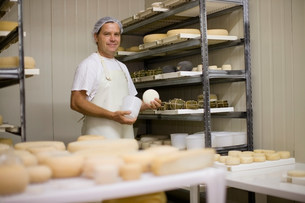 Worker at a cheese dairyの写真素材 [FYI03583017]