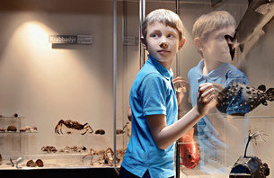 Boy admiring fish models behind glassの写真素材 [FYI03583433]