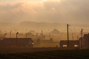 茶畑の朝霧の写真素材 [FYI03584292]