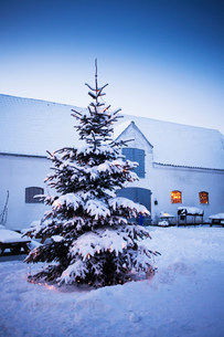 Tree covered in snow outdoorsの写真素材 [FYI03584455]