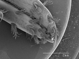 Magnified view of crawfish clawsの写真素材 [FYI03584789]