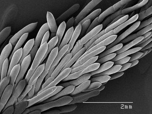 Magnified view of gills of crawfishの写真素材 [FYI03584791]