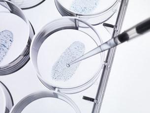 Pipette sampling finger print in labの写真素材 [FYI03585274]