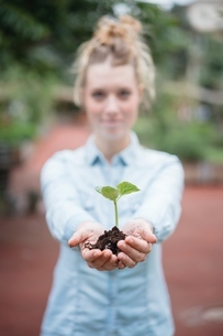 Woman holding seedlingの写真素材 [FYI03587278]