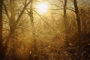 霧氷の森の写真素材 [FYI03587662]