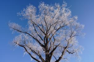 青空と霧氷の写真素材 [FYI03587682]