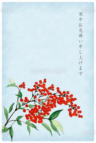 寒中お見舞い ハガキ 南天 水彩画 文字あり 白フチのイラスト素材 [FYI03587951]