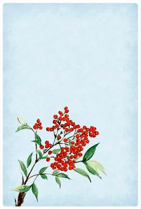 寒中お見舞い ハガキ 南天 水彩画 文字なし 白フチのイラスト素材 [FYI03587954]