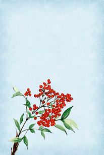 寒中お見舞い ハガキ 南天 水彩画 文字なしのイラスト素材 [FYI03588115]