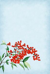寒中お見舞い ハガキ 南天 水彩画 文字なしのイラスト素材 [FYI03588134]