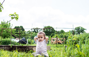 Baby at allotmentの写真素材 [FYI03588452]