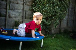 Baby boy crawling on trampolineの写真素材 [FYI03588504]