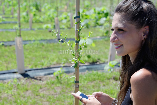 Young female goji berry plantation worker in field holding smartphoneの写真素材 [FYI03589893]