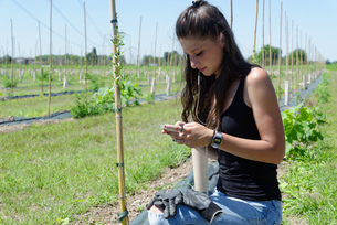 Young female goji berry plantation worker looking at smartphone in fieldの写真素材 [FYI03589894]