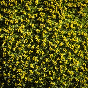 Overhead view of green plants, Nahuel Huapi National Park, Rio Negro, Argentinaの写真素材 [FYI03590189]