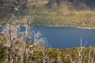Valley landscape with lake and bare trees, Nahuel Huapi National Park, Rio Negro, Argentinaの写真素材 [FYI03590205]