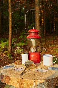 Playing cards, tinned sardines and tin cup on tree stump, Colgate Lake Wild Forest, Catskill Park, Nの写真素材 [FYI03591367]