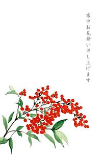 寒中お見舞い ハガキ 南天 水彩画 文字ありのイラスト素材 [FYI03592123]