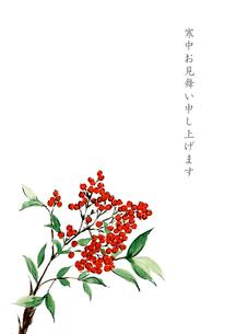寒中お見舞い ハガキ 南天 水彩画 文字ありのイラスト素材 [FYI03592124]