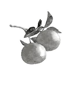 ハッサク 水彩 八朔 果物 水墨画風 モノトーン 素材のイラスト素材 [FYI03592861]