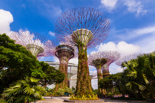 Supertree Grove and gardens, Singapore, South East Asiaの写真素材 [FYI03593453]