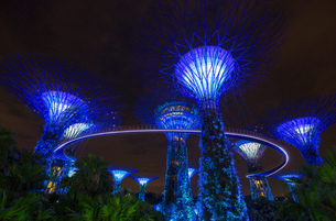 Blue Supertree Grove at night, Singapore, South East Asiaの写真素材 [FYI03593455]