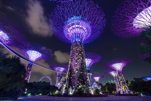 Purple Supertree Grove at night, Singapore, South East Asiaの写真素材 [FYI03593456]