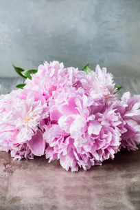 Pink peonies on tableの写真素材 [FYI03593469]