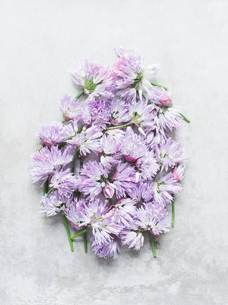 Cut chives flowers in clusterの写真素材 [FYI03593473]