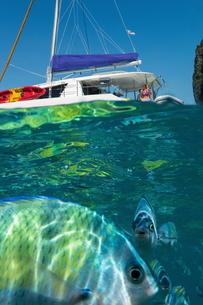 Underwater image of fish by yacht, Koh Phi Phi Leh, Krabi, Thailand, Asiaの写真素材 [FYI03594040]