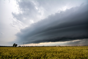 Layered supercell storm over and around wheat fields, Fairview, Oklahoma, USAの写真素材 [FYI03594296]