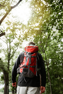 Senior man walking in forest, carrying backpack, rear viewの写真素材 [FYI03594305]