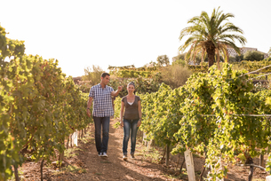 Male and female winemakers strolling in vineyard, Las Palmas, Gran Canaria, Spainの写真素材 [FYI03594656]