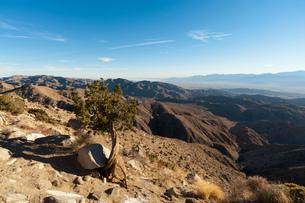 Dwarf Tree, Keys View, Joshua Tree National Park, California, USAの写真素材 [FYI03594803]