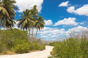 Sand pathway through foliage and palm trees, Jericoacoara national park, Ceara, Brazil, South Americの写真素材 [FYI03595402]