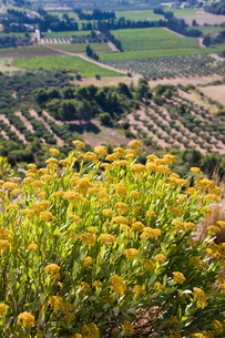 High angle view of agricultural fields below yellow flowers, Les Baux-de-Provence, Provence-Alpes-Cの写真素材 [FYI03596393]