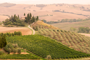 Rolling landscape with vineyard and farmhouse, Tuscany, Italyの写真素材 [FYI03599635]