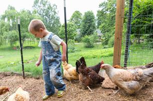Boy in chicken coop with hensの写真素材 [FYI03599710]