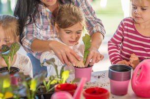 Mid adult woman helping young children with gardening activityの写真素材 [FYI03599977]