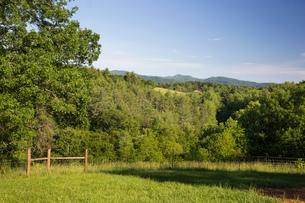 Field landscape of free range organic farmの写真素材 [FYI03600110]