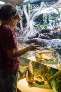 Boy gazing at snake in water of display case at natural history museumの写真素材 [FYI03600117]