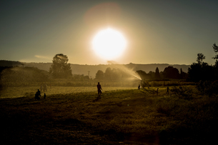 Field landscape with adults and children playing with agricultural sprinkler at sunsetの写真素材 [FYI03600323]
