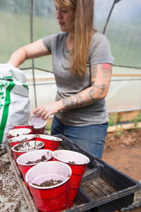 Woman in polytunnel filling plastic cups with compostの写真素材 [FYI03600561]