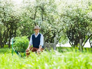 Farmer pushing barrow of plants in fieldの写真素材 [FYI03600879]