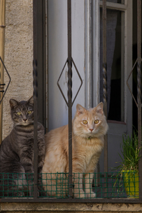 Cats sitting by doorway of homeの写真素材 [FYI03601163]