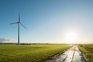 Windturbine in field, Zeewolde, Flevoland, Netherlands, Europeの写真素材 [FYI03601193]