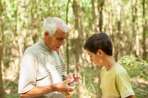 Grandfather and grandson mushroom hunting in forest, Prievidza, Banska Bystrica, Slovak Republicの写真素材 [FYI03601938]