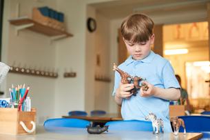 Primary schoolboy looking at plastic toy animals in classroomの写真素材 [FYI03602100]
